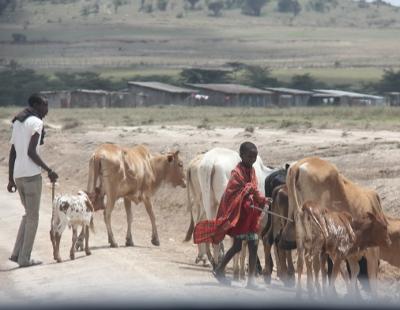 Masait ja karja